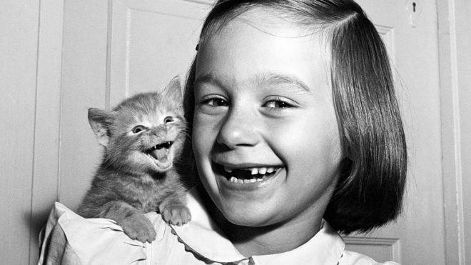 Paw-trait master: The archive of cat photographer Walter Chandoha