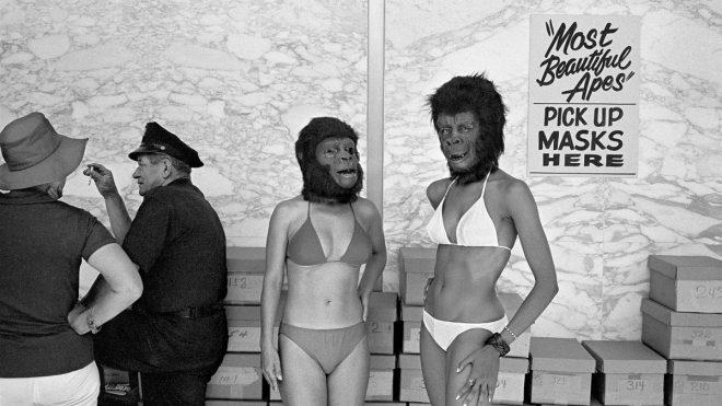 Michael Jang monograph offers a joyous snapshot of 1970s California