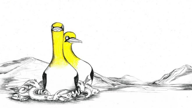 Relive the tragic tale of Nigel the gannet in Natasza Cetner's animation