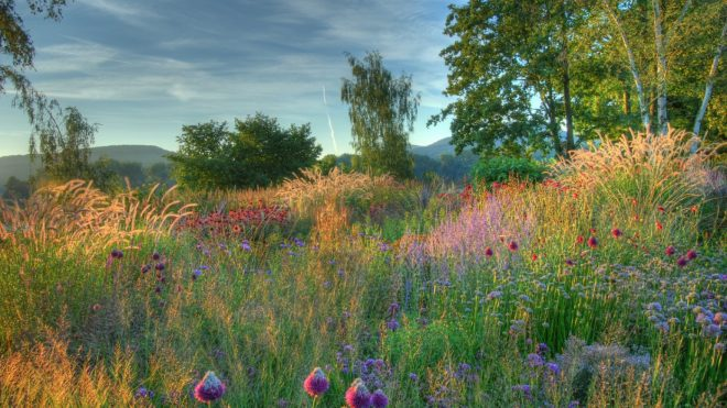 Piet Oudolf's advise on garden design and creating inspirational outside spaces