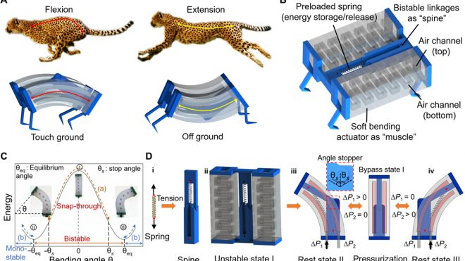 Leveraging elastic instabilities for amplified performance: Spine-inspired high-speed and high-force soft robots