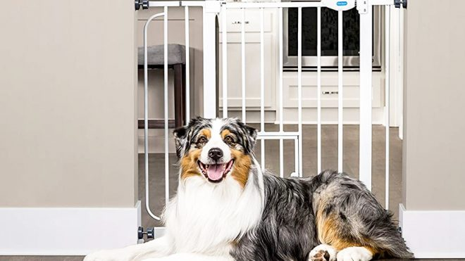 Keep Your Furry Friends Secure With These Pet Safety Gates