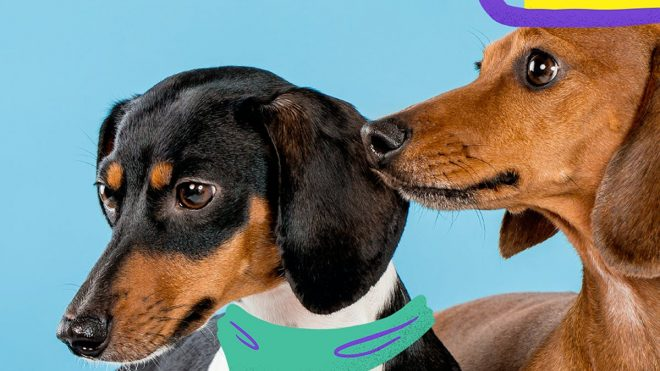 Witzig is the doggy lifestyle brand made for dachshund lovers
