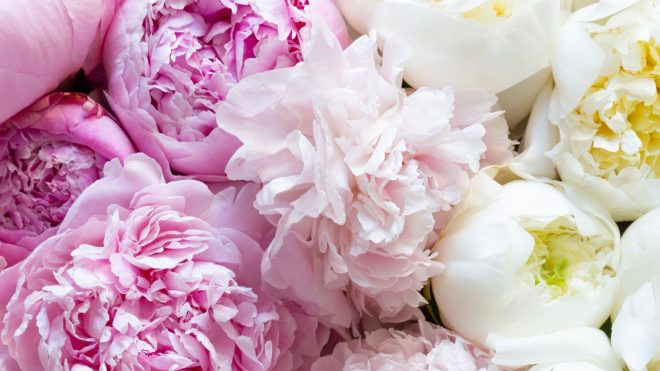 Peony season is here! 7 expert tips for styling and looking after your peonies